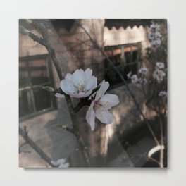 #114Photo #126 #Spring #Season #SeeingLife #NewFruits Metal Print