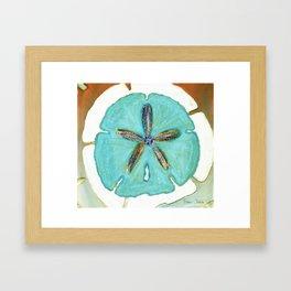 Sand Dollar Star Attraction Framed Art Print