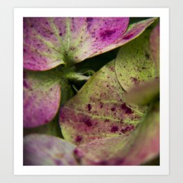 hydranjea pink and green Art Print