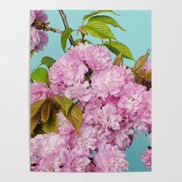 Cherries in Bloom Poster