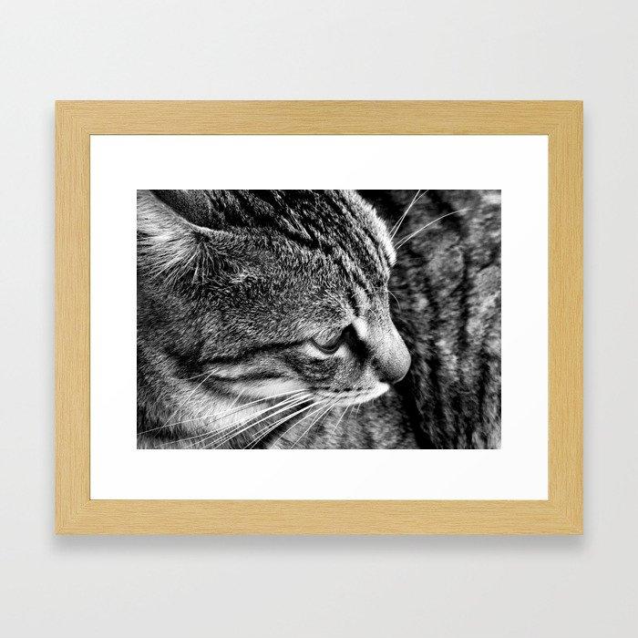 Black and White Tabby Cat Framed Art Print