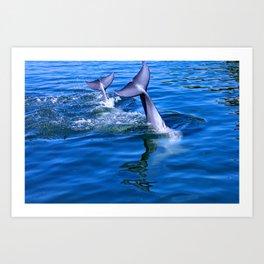 Dolphin tails Art Print