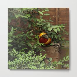 Golden Pheasant Metal Print
