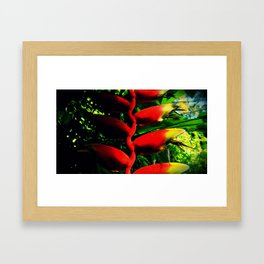 Colors of the Tropics Framed Art Print