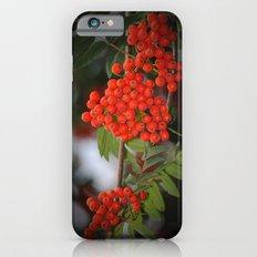 Rote Beeren iPhone 6s Slim Case