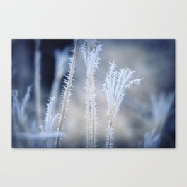 Cold Hoarfrost on the weeds in the winter Canvas Print