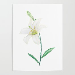 white lily watercolor Poster
