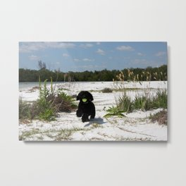 The pup  Metal Print