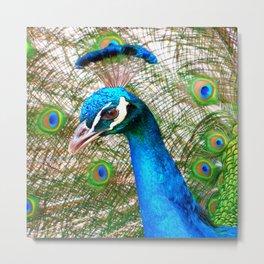 Peacock in Bloom Metal Print