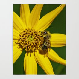 The Bumble and The Sunflower #3 Poster