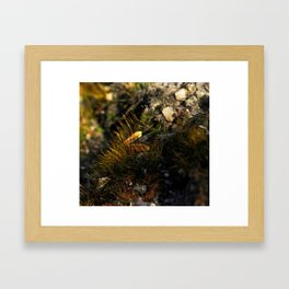 Wixy Seed Moss Framed Art Print