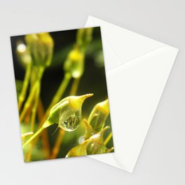 forest cover /Agat/ Stationery Cards