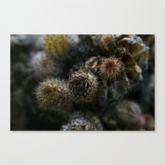 Prickly points Canvas Print