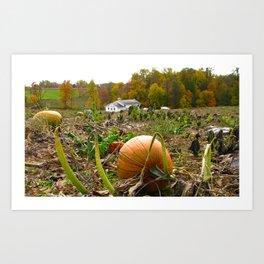 Pumpkin Patch and Amish School Art Print