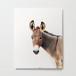 Gentle Wild Donkey portrait Metal Print
