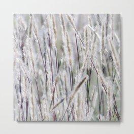 Silver hair grass Metal Print