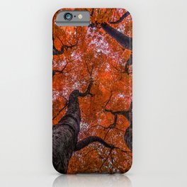 Nishinomiya Japanese Garden - Autumn Trees iPhone Case