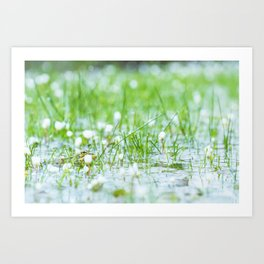 Green frog on a lake in spring Art Print