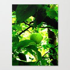 temptation. Canvas Print
