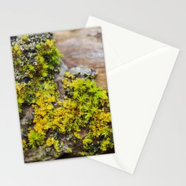 Moss on a Fallen Tree Stationery Cards