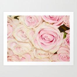 Pretty Pink White Roses Art Print