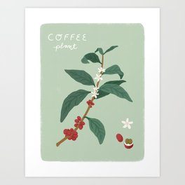 Coffee Botanical Art Print