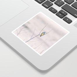 """""""Cassin's Kingbird 2"""" by Murray Bolesta Sticker"""