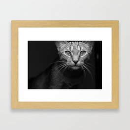 cat katz black white 4 Framed Art Print