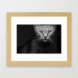cat katz black white 4 Framed Art Print