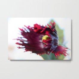 Poppy on the wind Metal Print