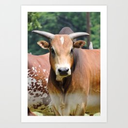 Mini Brahman Art Print