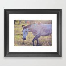 Star Horse Framed Art Print
