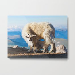 Mountain Goats Nanny And Kid Metal Print