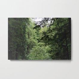 Transparent Forest Metal Print