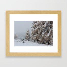 Snowy pines Framed Art Print
