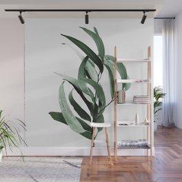 Eucalyptus - Australian gum tree Wall Mural