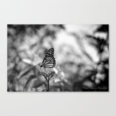 Papillion en  Noir Canvas Print