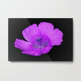 poppy in the garden Metal Print
