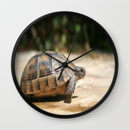 Sideview of A Walking Turkish Tortoise Wall Clock