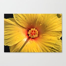 Buttery Yellow Hibiscus Canvas Print