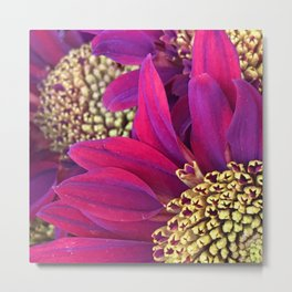 Exotic Bright Pink Red Flowers With Gold Centers Metal Print
