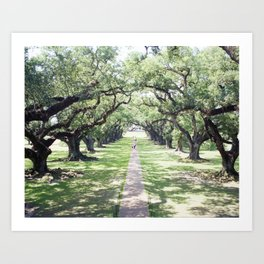 Oak Alley Art Print