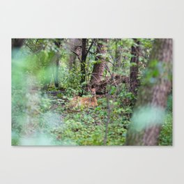 Forest Friend Canvas Print
