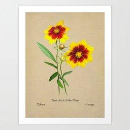 Tickseed Botanical Art Print