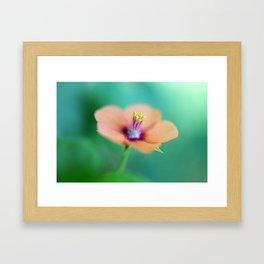 Pretty in Peach Framed Art Print
