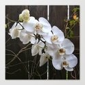 White Orchid by hereswendy