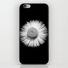 Fleabane B and W iPhone & iPod Skin