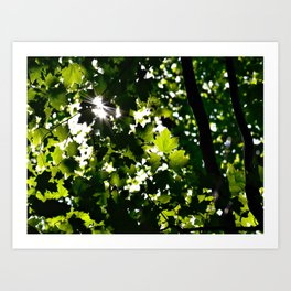 Green Maple Leaf PattrnTree Leaves Parallax Sunshine Shows Leaves Green Color Art Print