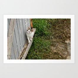 The courious cat Art Print