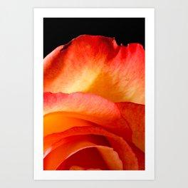 Rosa Aurora Art Print